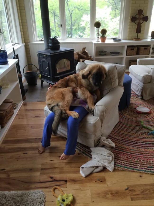 dogs clueless of personal space 13