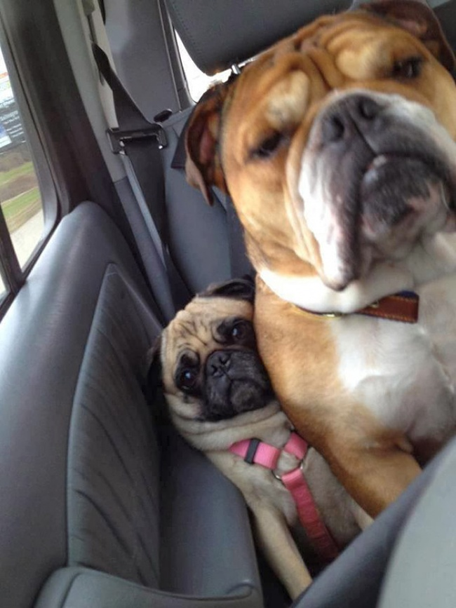 dogs clueless of personal space 5