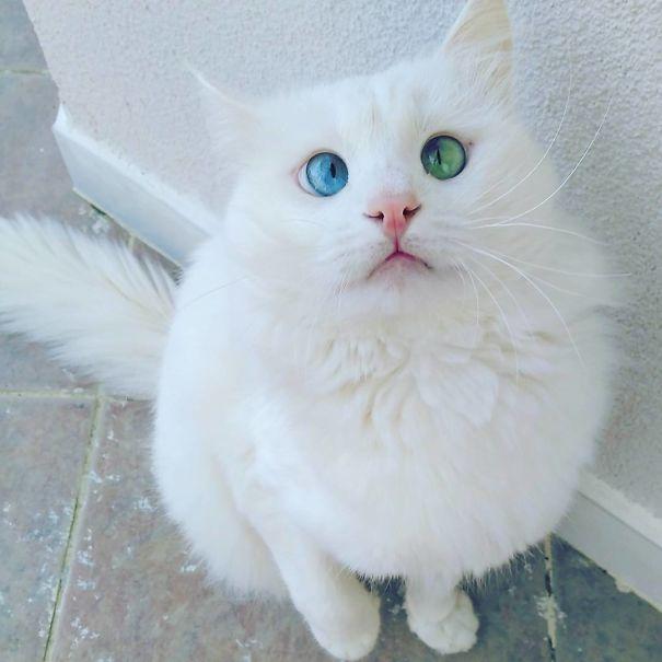 googly eyed cats