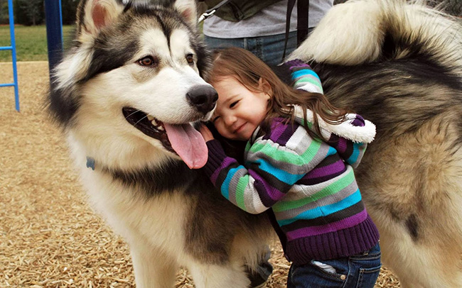 special relationships between dog and child