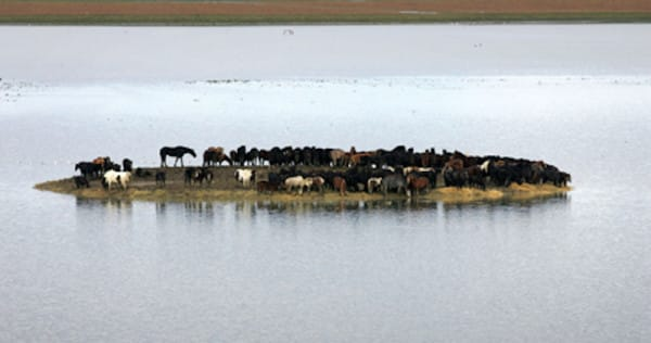 trapped horses in islands 1