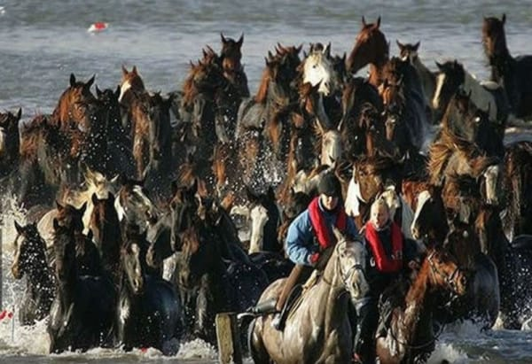 trapped horses in islands 4