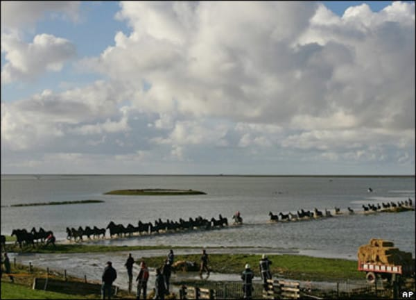 trapped horses in islands 5