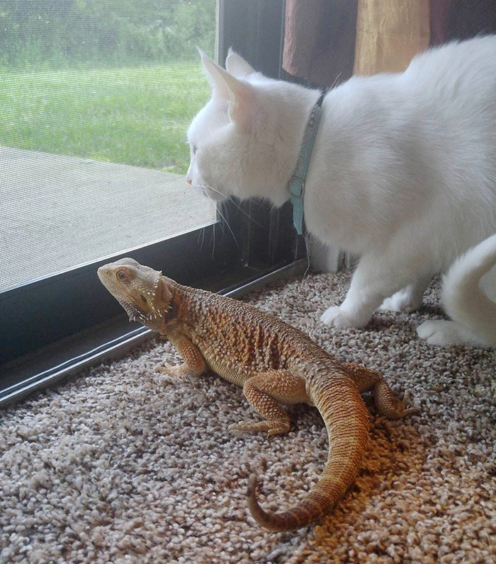 cat became friend with dragon 3