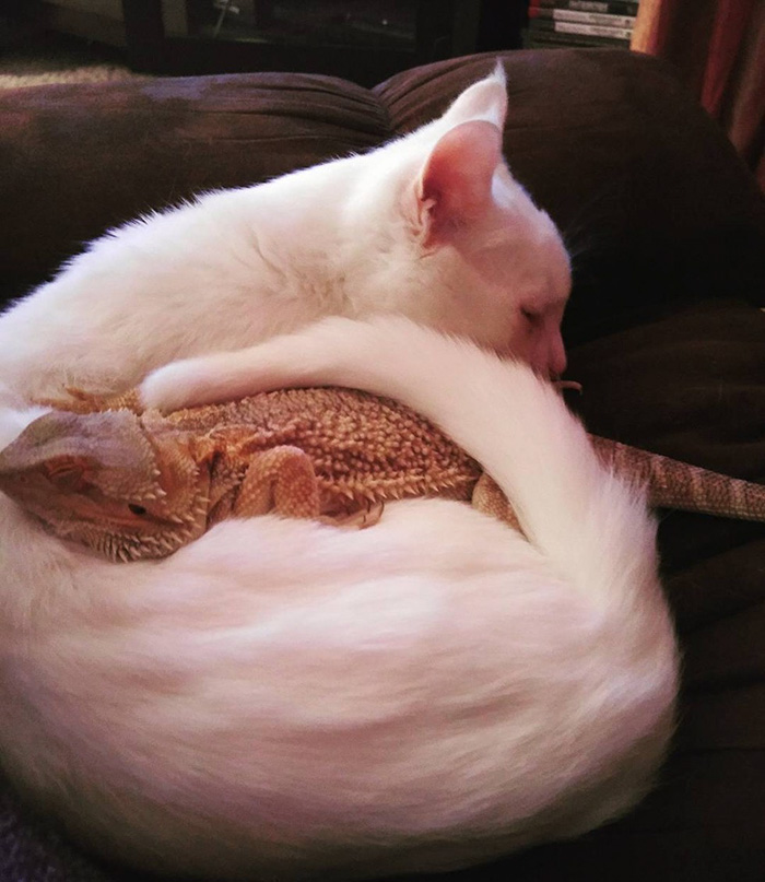 cat became friend with dragon 4