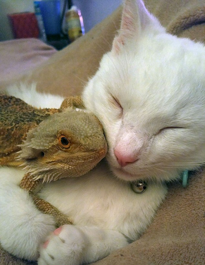 cat became friend with dragon 5