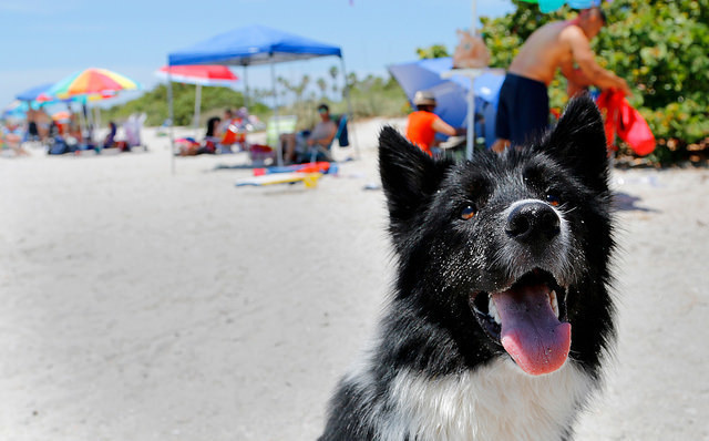 coolest dog parks in the world
