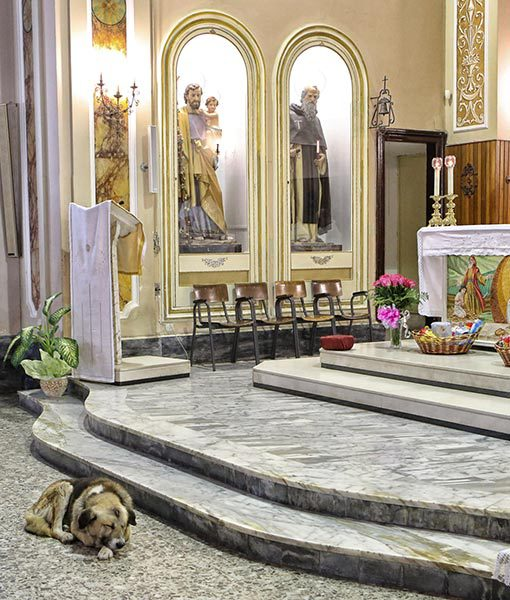 dog goes to church everyday 1