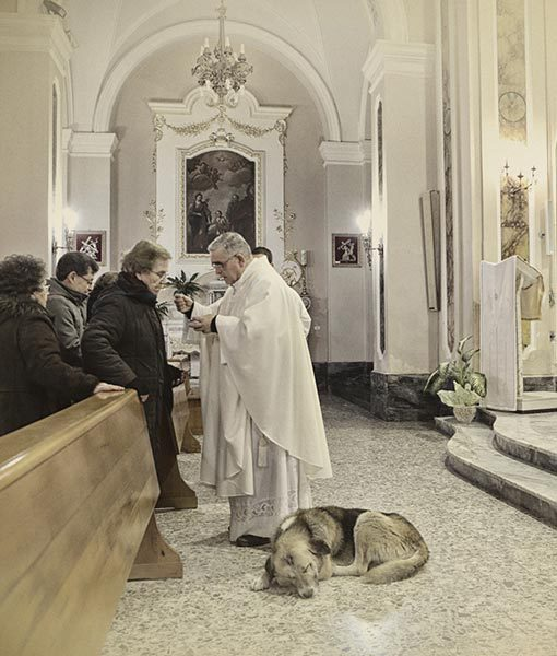 dog goes to church everyday 2