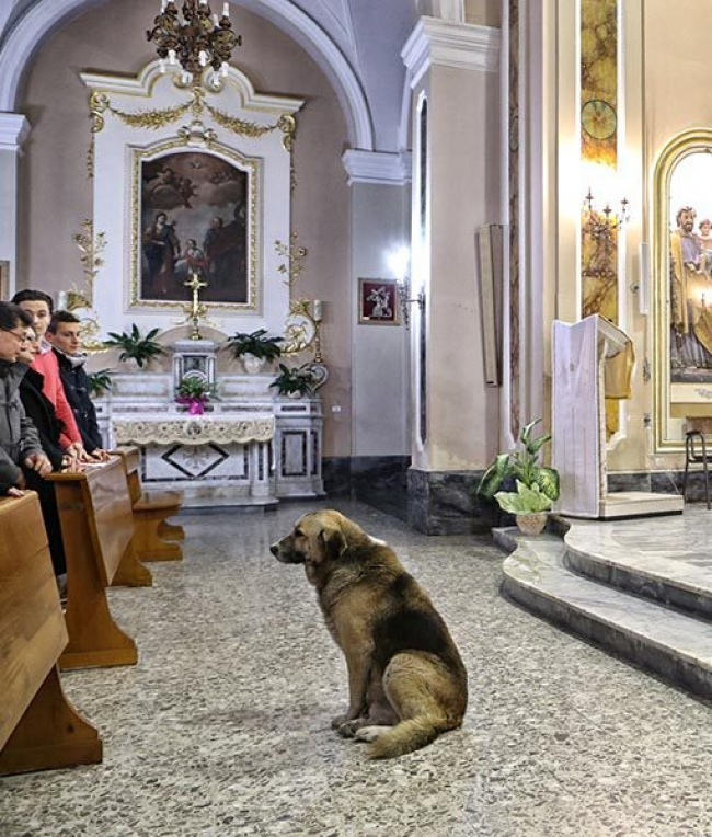 dog goes to church everyday 3