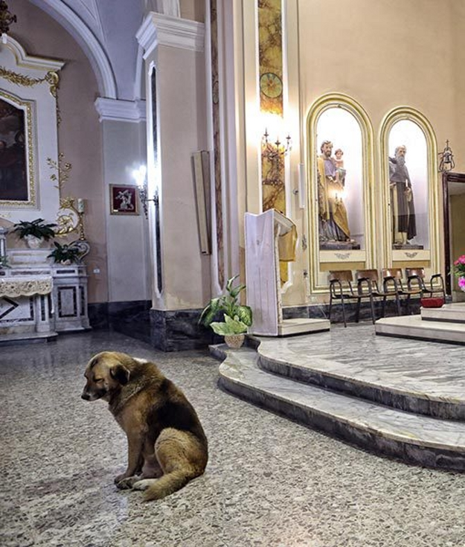 dog goes to church everyday 4