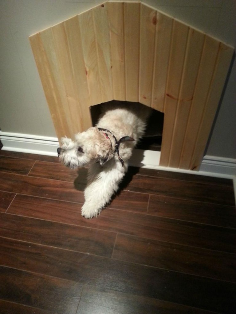 dog house under the stairs 10