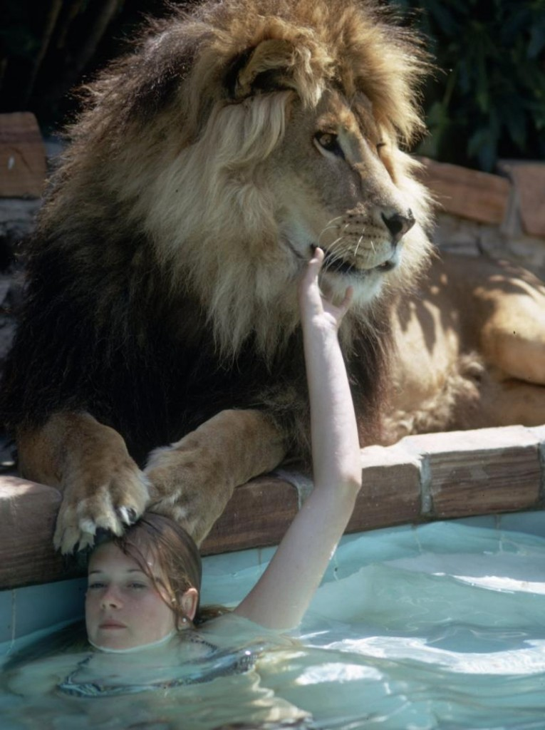 family has a pet lion