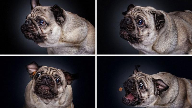 german photographers captures hungry dogs