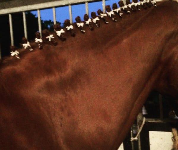 horse mane braiding
