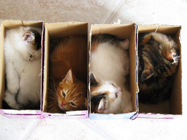 kind of liquid cats
