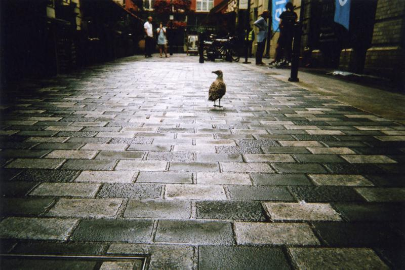 photographs taken by homeless people 12
