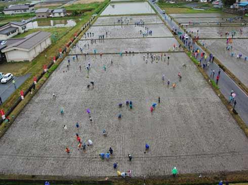 rice fields 1