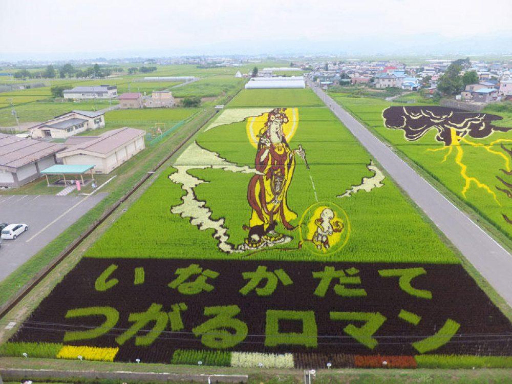 rice fields 10