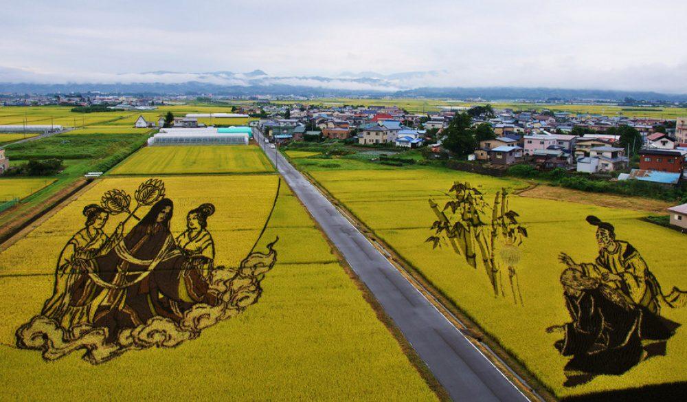 rice fields 11