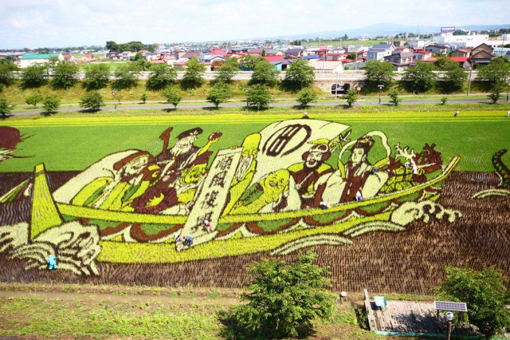 rice fields 12