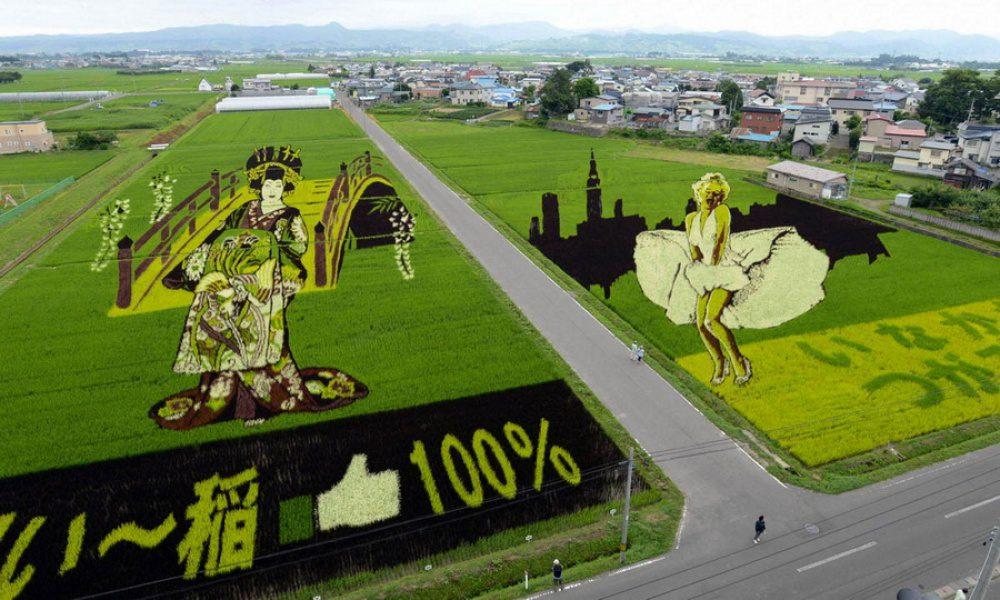 rice fields 13