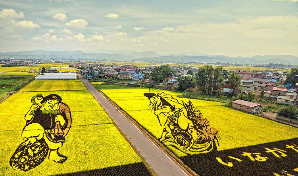 rice fields 14