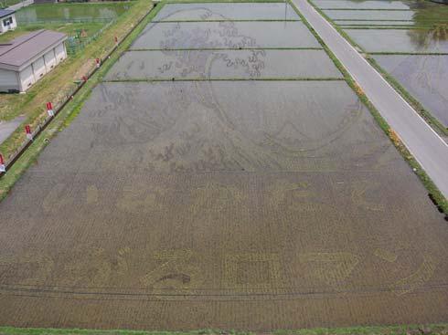 rice fields 2