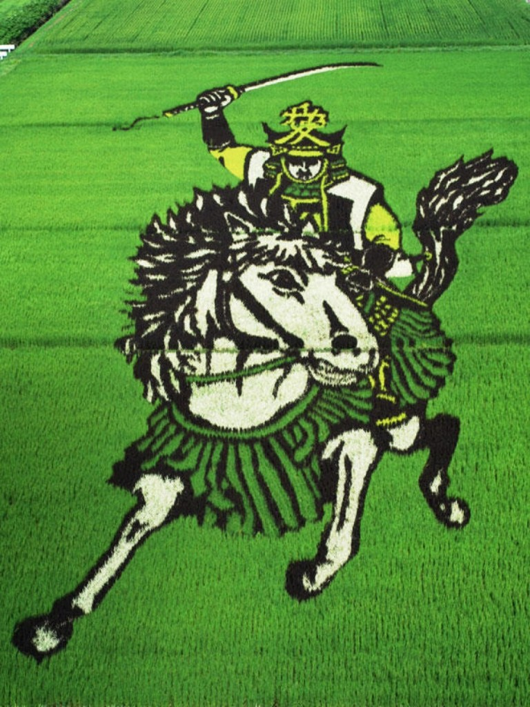rice fields 4