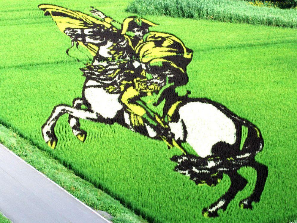 rice fields 6