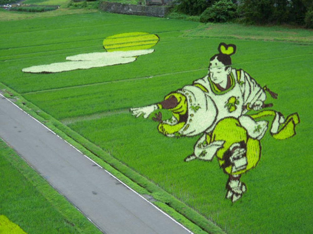 rice fields 7