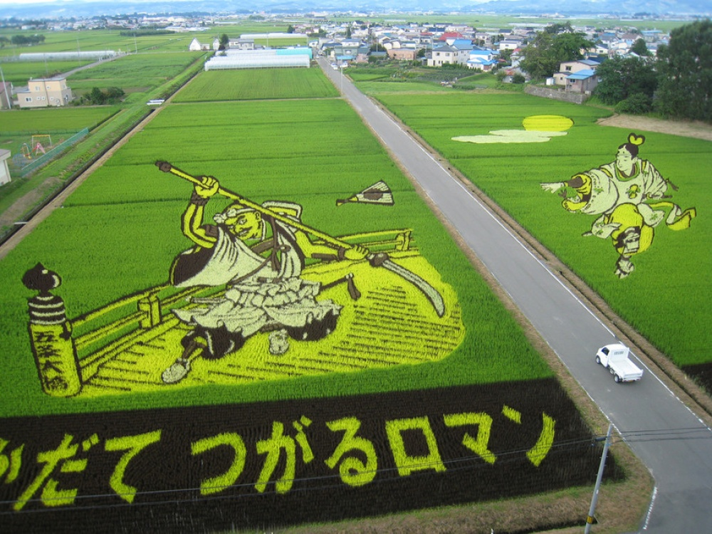 rice fields 8