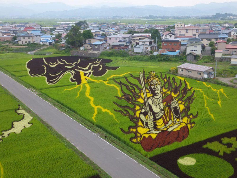 rice fields 9