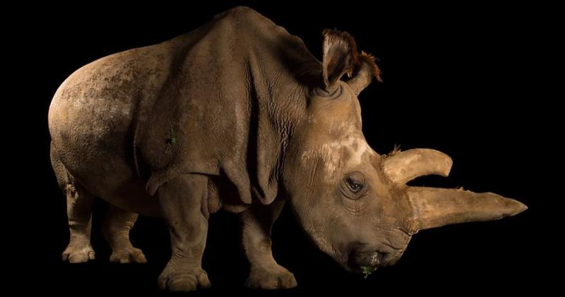 soon extinct animals 7