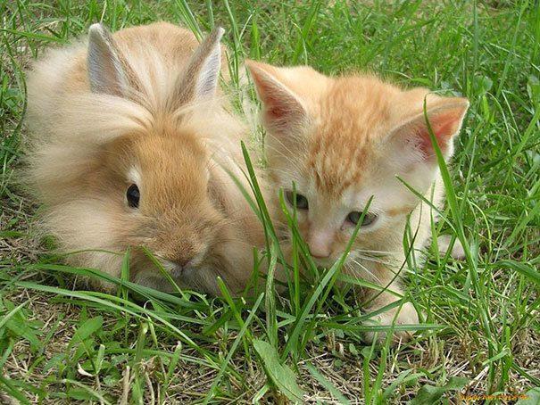 animal brothers 12