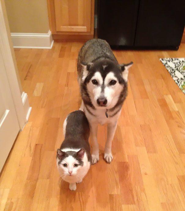 animal brothers 9