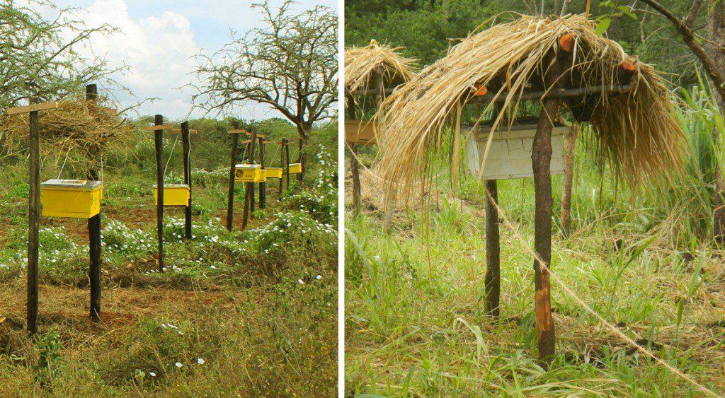 beehive fences 2