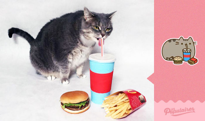 cat recreates pusheen stickers 1