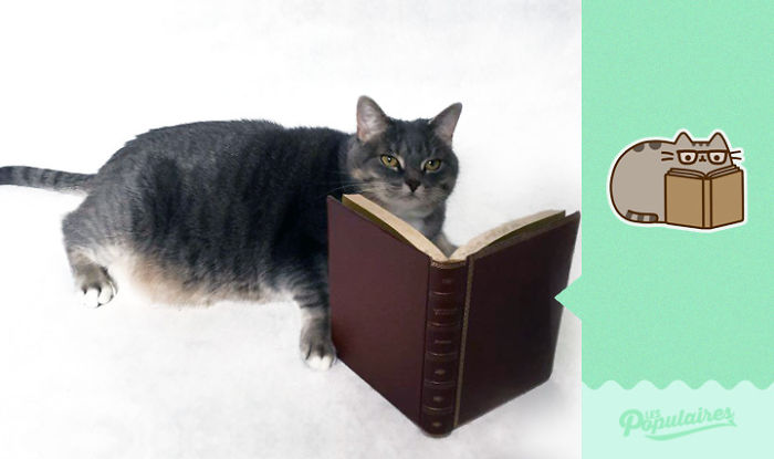 cat recreates pusheen stickers 11