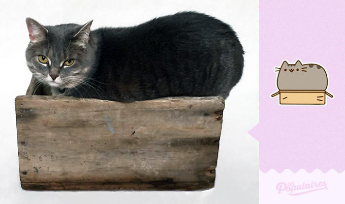 cat recreates pusheen stickers 12