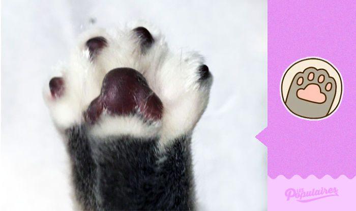 cat recreates pusheen stickers 3