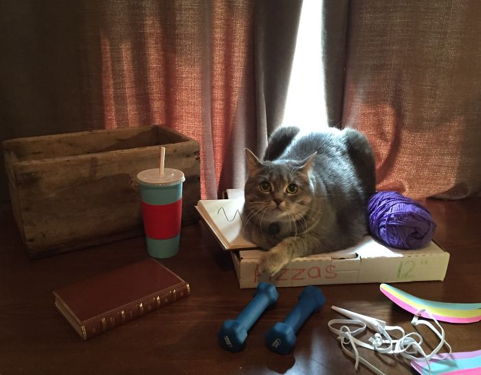 cat recreates pusheen stickers 7