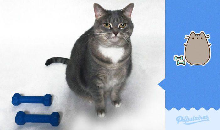 cat recreates pusheen stickers 9