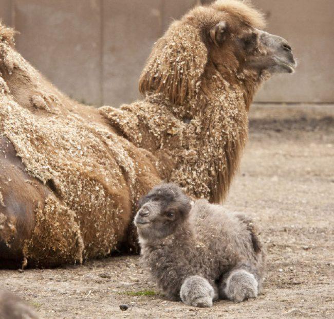 cute baby animals 10