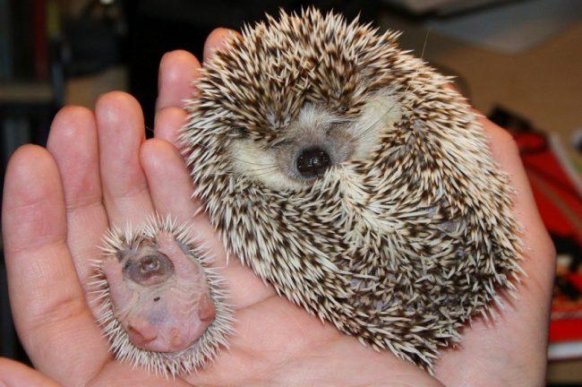 cute baby animals 15