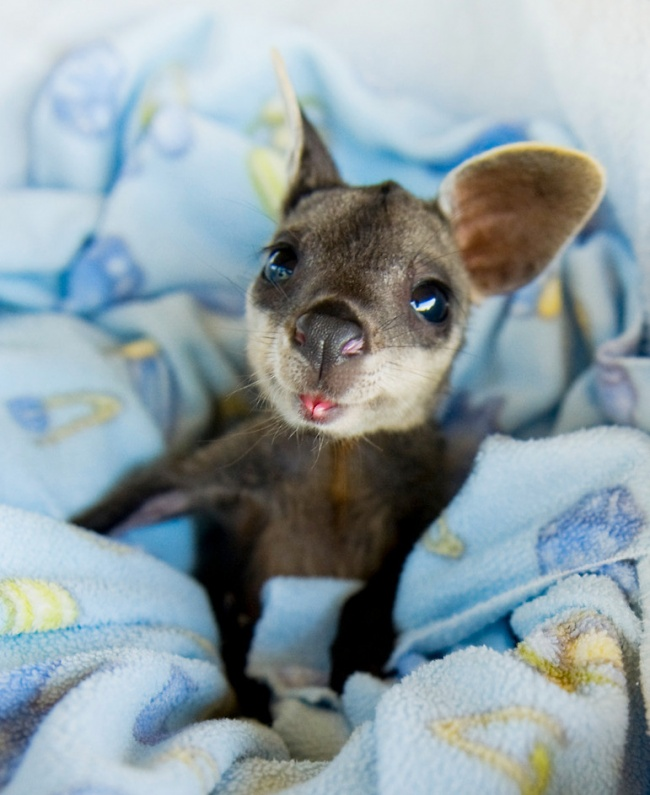 cute baby animals 4