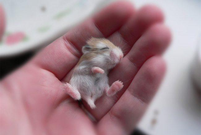 cute baby animals 8