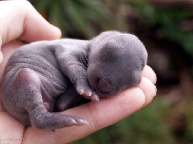 cute baby animals 9