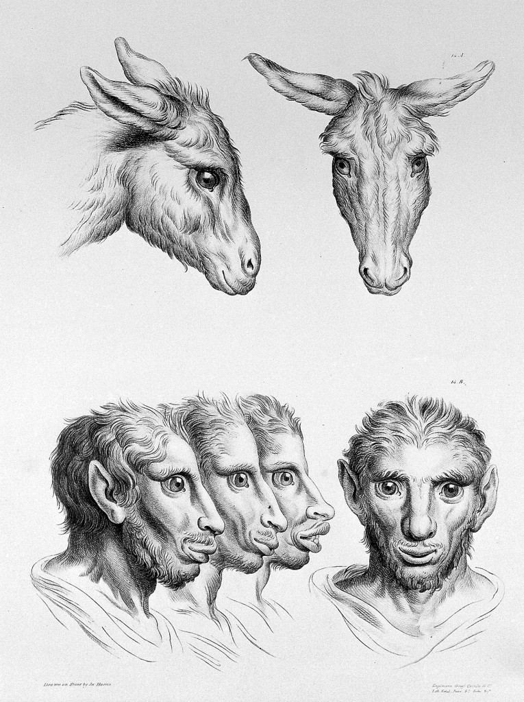 humans evolved from other animals 2