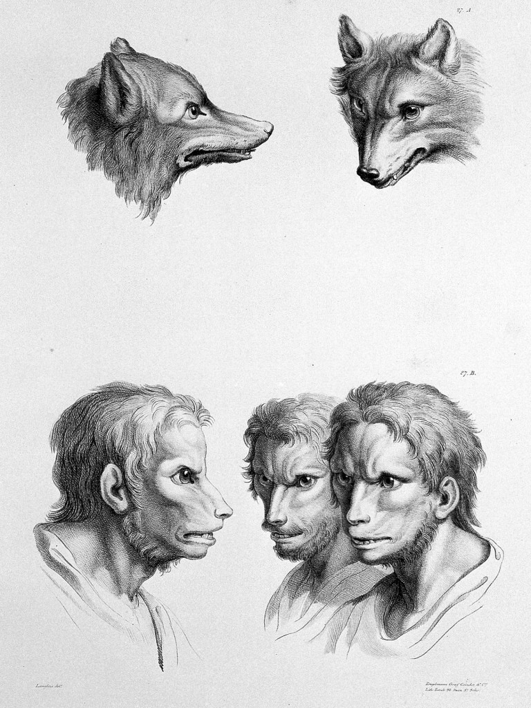humans evolved from other animals 4